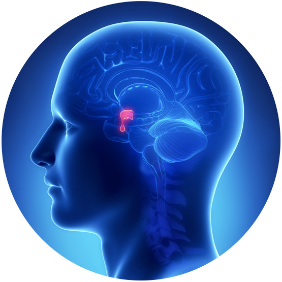 Acromegaly-Support-Pituitary-Gland-Blue